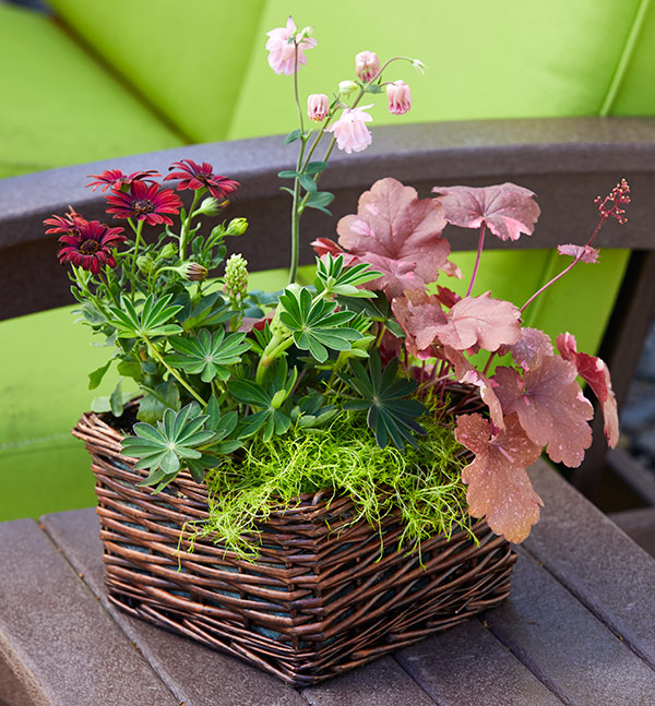 c-hostess-basket-lead2: An upcycled basket combined with spring plants from the garden center make for a lovely hostess gift.