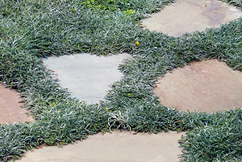 Five Drought Tolerant Lawn Replacements, How To Replace Grass With Ground Cover