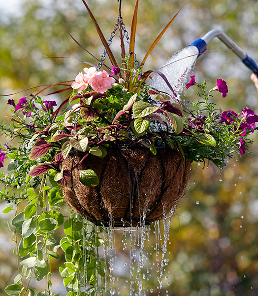 how-to-water-hanging-basket-dripping-basket4: Put the excess water from your hanging basket to work by positioning other containers below.