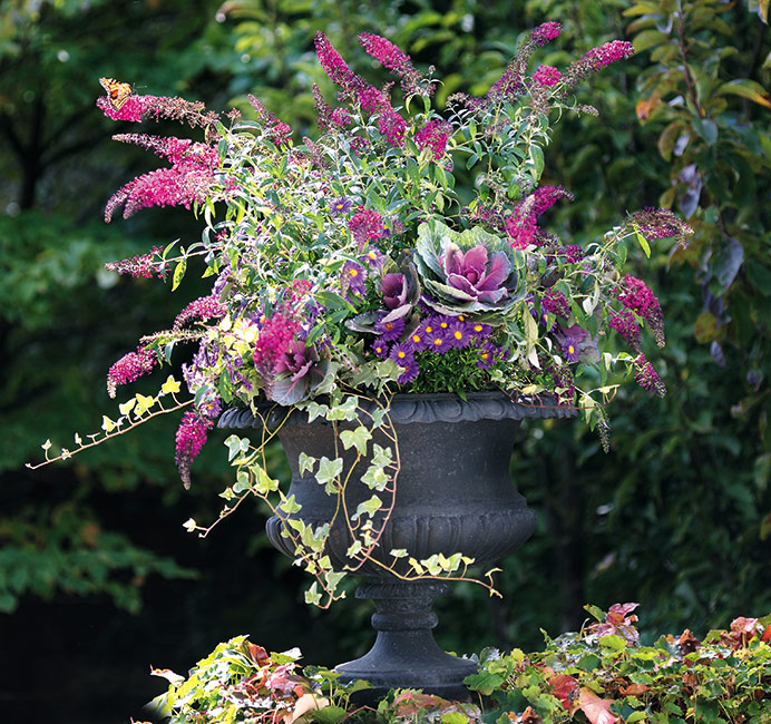 c-butterfly-feast-kale-leadLg: Butterflies can't resist the butterfly bush and asters in this fall container