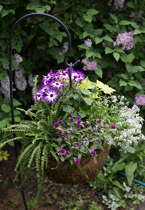 shephook-hanging-basket-web-ready: A shepherd's hook elevates plants without the need for a large container or ground space.