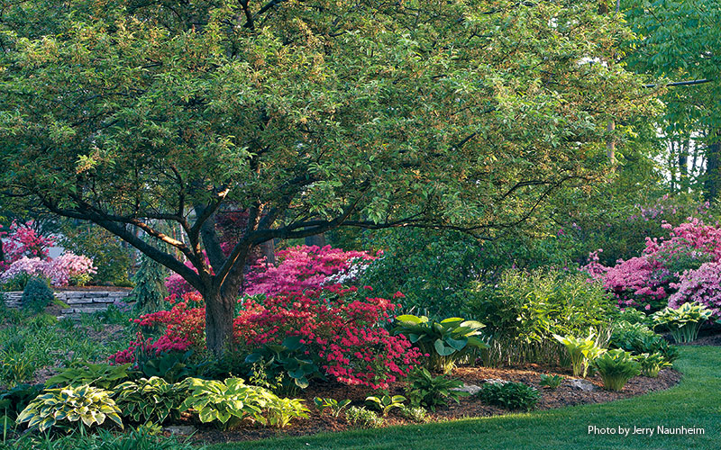 6-ways-to-create-a-beautiful-spring-garden-Balance: Vibrant colors, such as pinks, reds and oranges, draw your attention. But they also provide a sense of warmth among all the cool greens and cool days of spring.