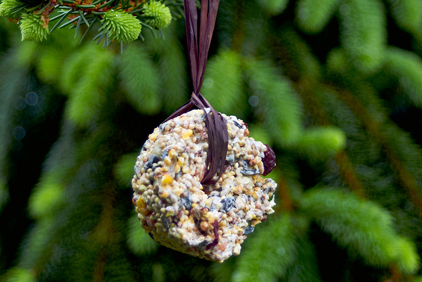 bird-seed-ornaments-lead: These birdseed ornaments are sure to bring birds to your yard, and dress up your tree, too!