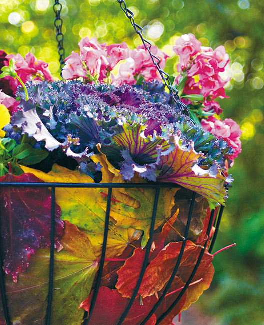 add-fall-color-to-hanging-basket-lead tall: Tuck fall leaves between the liner and the basket to make a colorful fall hanging basket for your late-season garden.