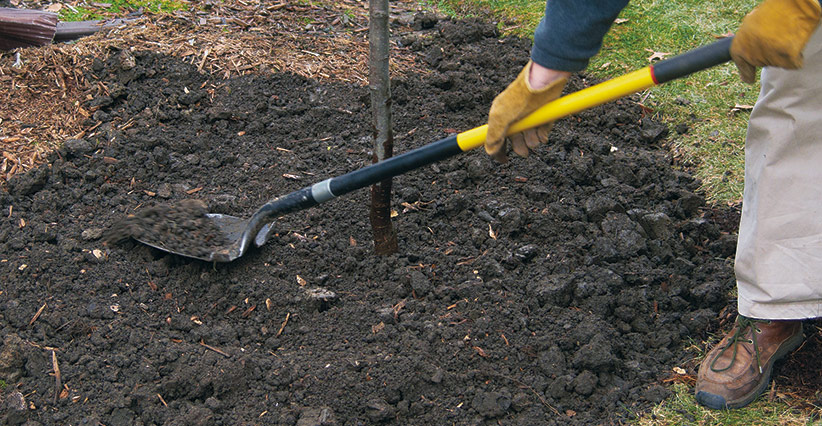 ht-p-plant-a-tree-in-4-steps-6: Firm the soil around the trunk and water again to remove air pockets.