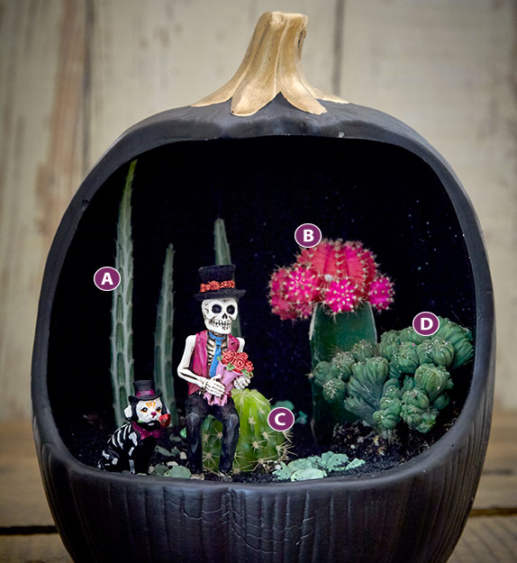 Pumpkin-terarrium-lettered2: Here you can see how mixing different shapes and foliage colors creates an interesting arrangement for your terrarium.