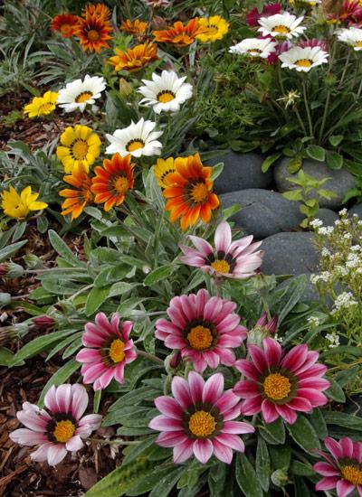 4 drought-tolerant plants | Garden Gate
