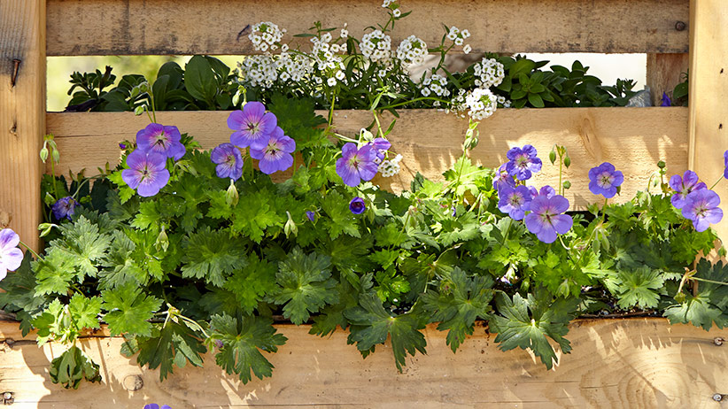 upcycled-pallet-planter-pv