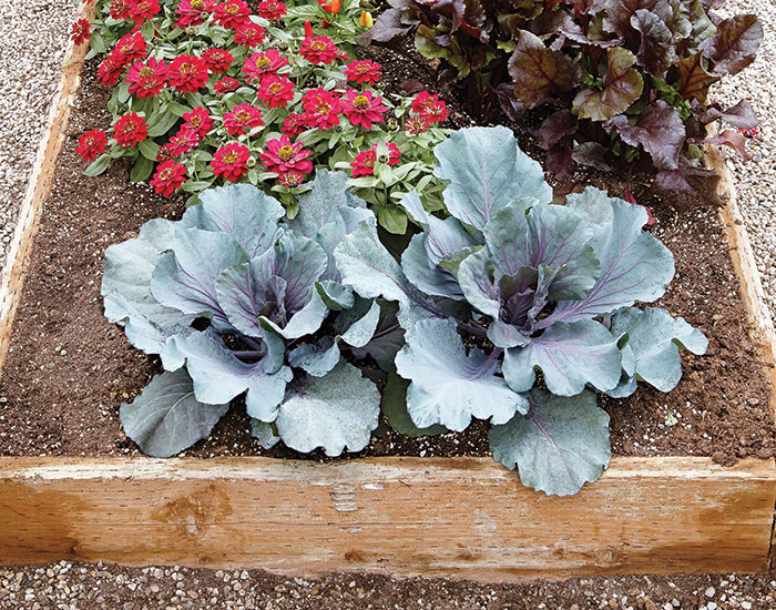 Wooden raised garden bed: Planting vegetables in a raised garden bed made of wood? Your best choice is cedar or another weather-resistant untreated wood.
