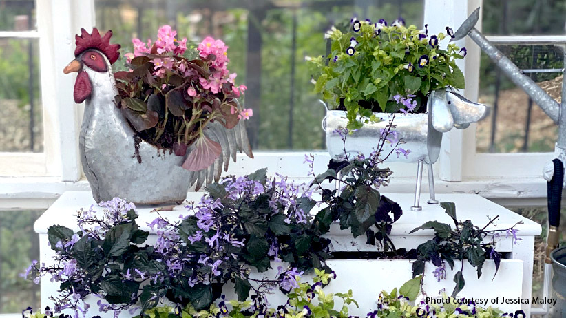 Quarantine Garden Projects