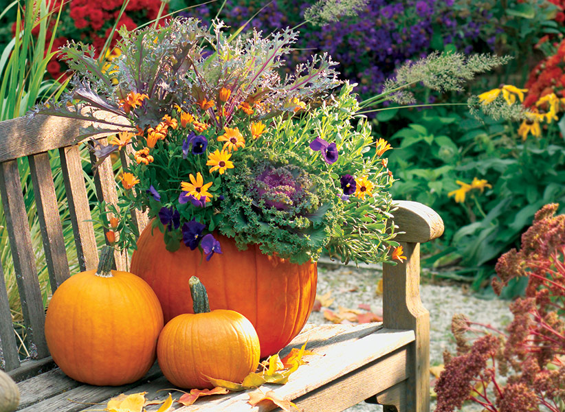 c-pumpkin-planter-lead: This festive pumpkin planter uses cool-weather plants like pansies and kale.
