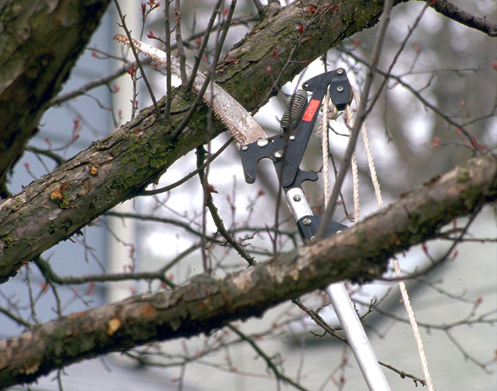 Pole-pruner: Pole pruners often have a saw blade with a lopper-style cutting hook underneath so you can use either feature.