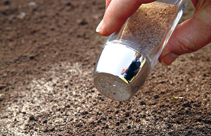 how-to-direct-sow-seeds-shaker: Mix tiny, hard-to-pick-up seeds, such as moss rose, with a bit of sand and sprinkle with a salt shaker. Light-colored sand shows how evenly you've spread out the seed.