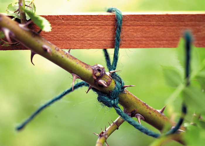 summer-garden-checklist-train-climbing-plants: Green twine will blend in with the stems and leaves.