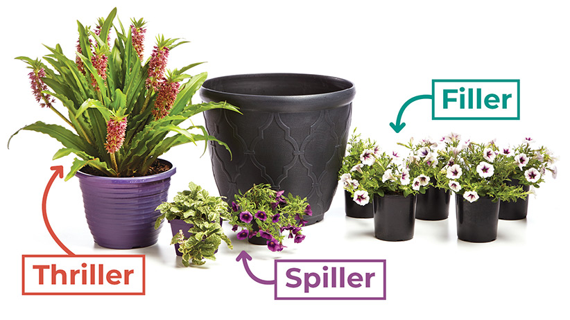 easy-formula-for-great-garden-containers-thriller-spiller-thriller-graphic