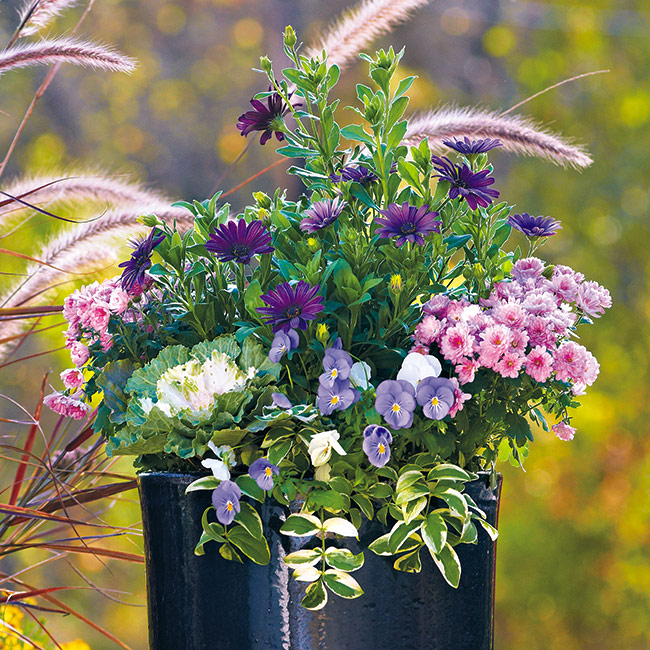 fall-container-ideas-cool-color-pallete