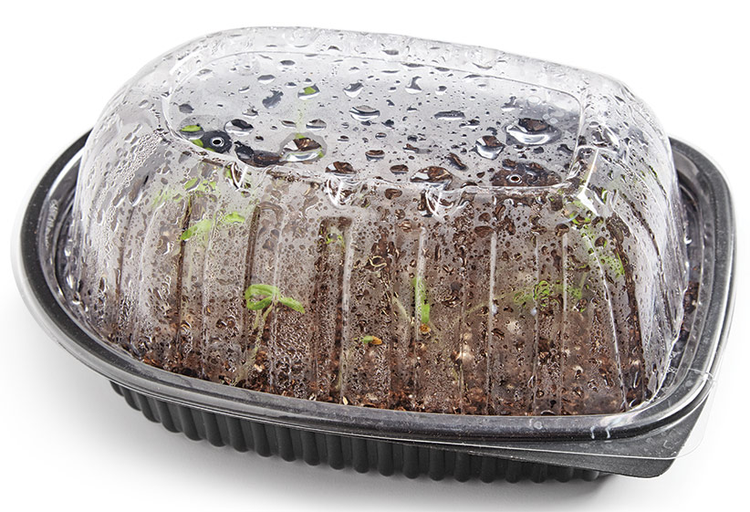 ht-ss-successfully-start-seeds-3: If the lid doesn't have ventilation holes, poke a few. Good air circulation will help prevent disease.