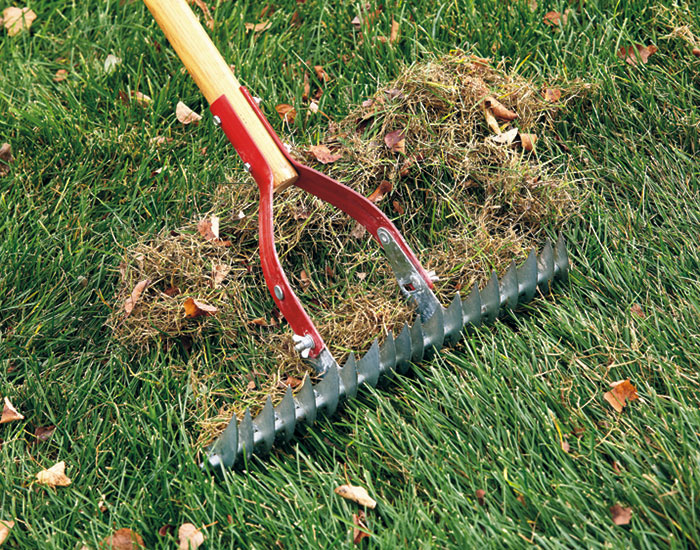 find-the-right-rake-thatch-rake: Thatch rakes remove accumulated lawn debris to keep your turf healthy.
