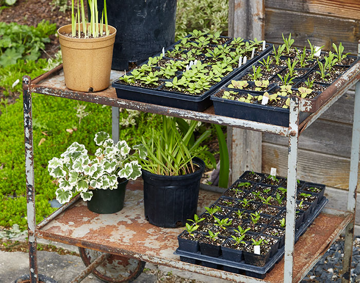 how-to-harden-off-plants-cart: Wheels make it easy to move plants in and out of the garden shed and to locations that have more sun as they can tolerate the added light. Use a cart like this one or fill your wheelbarrow.