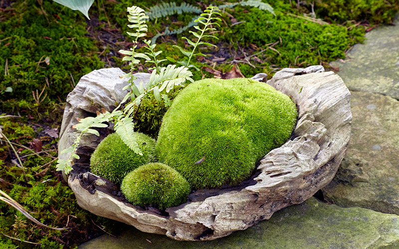moss-garden-growing-moss-in-containersR: You can also combine moss in containers with other moisture-and-shade-loving plants, such as ferns like you see here.