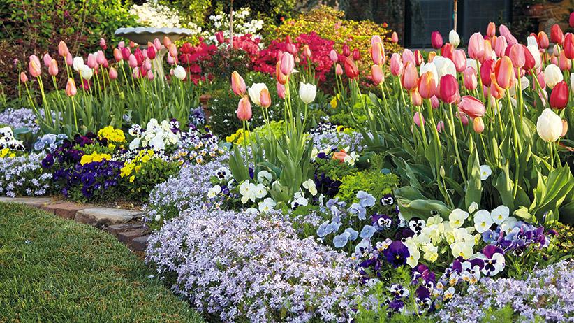 Grow Your Best Tulips Ever Garden Gate