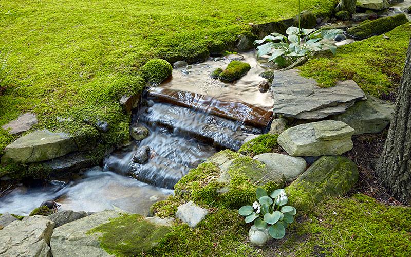 Marvelous Moss Garden Gate, Growing A Moss Garden