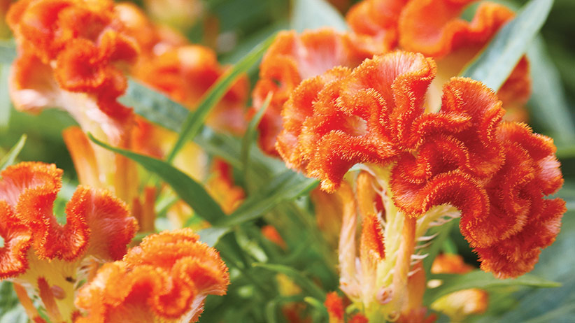 4 Plants With Long Blooming Color Garden Gate
