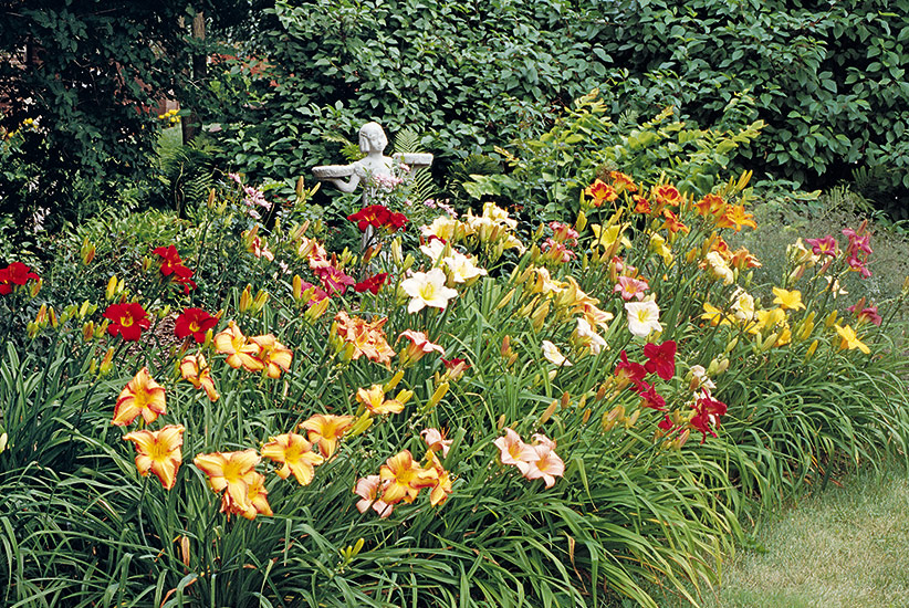 Daylilies Are Some Of The Most Forgiving Perennials Around. As Long As They  Have Enough Sun And Water, Theyu0027ll Perform Well. But If Truly Stunning  Daylilies ...