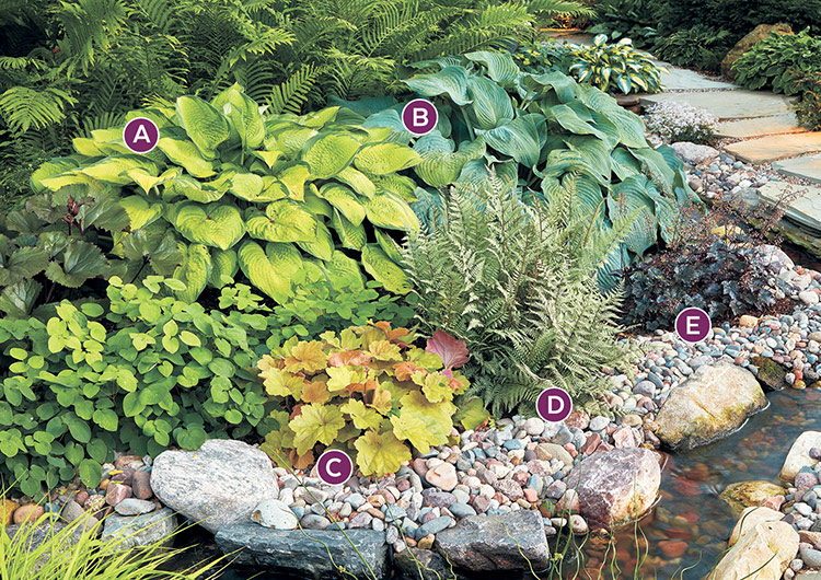 shade-garden-combinations-with-hostas-lettered