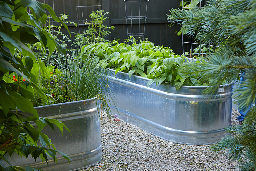 Vegetables growing in galvanized raised garden beds:Soil in galvanized raised garden beds warms up early in spring so gardeners can get an earlier start on heat-loving vegetables like tomatoes, peppers and eggplant.