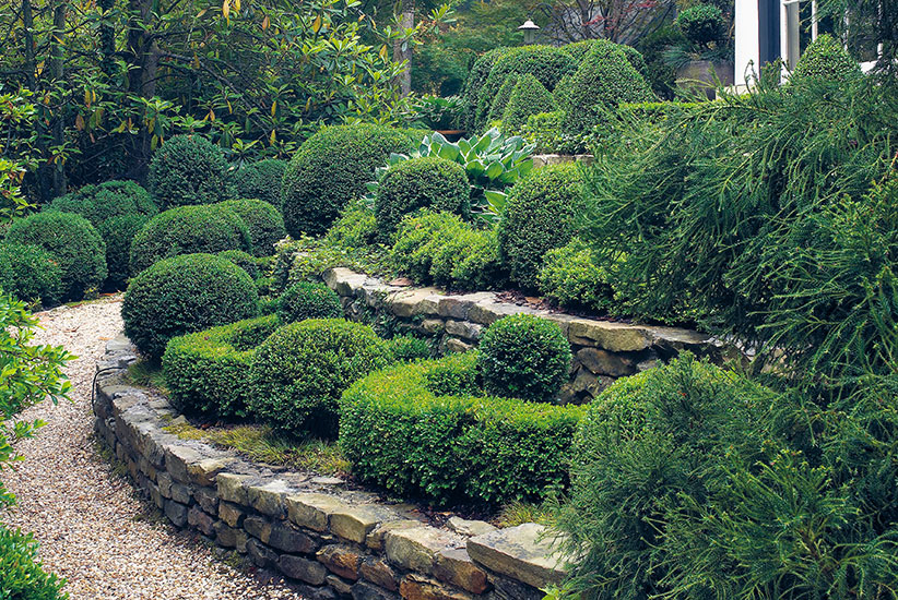 What-to-do-about-boxwood-blight-lead: Beautiful gardens full of boxwood like this are at risk of devastation from boxwood blight.
