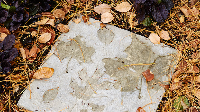 DIY Stepping Stones
