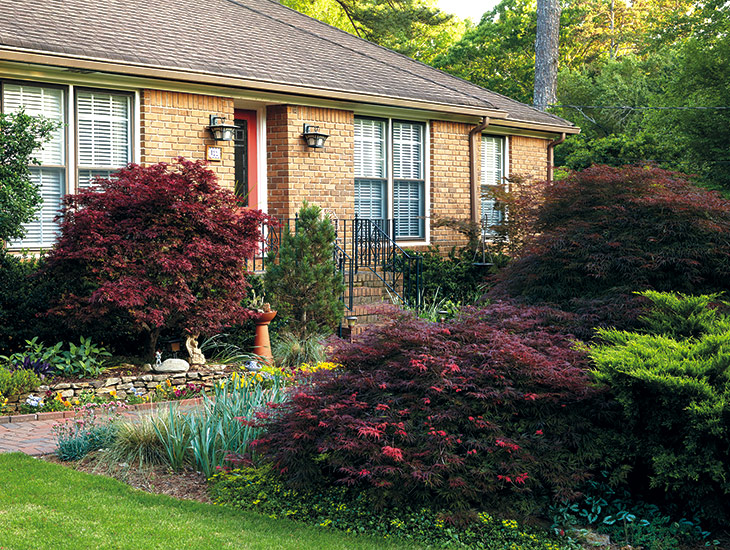 designing-with-japanese-maples-great-for-entries: Rounded shapes of Japanese maples add balance next to the hard lines and squared shapes of the house. Placing them next to the house also protects these cold-sensitive trees from drying winter winds.