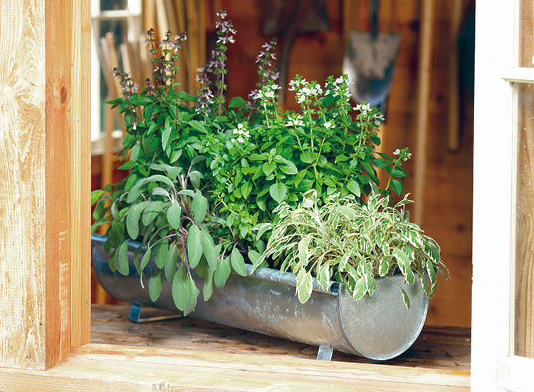 container-herb-garden-ideas-lead