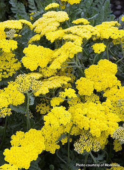 10 Low Maintenance Perennials For Your Garden Garden Gate