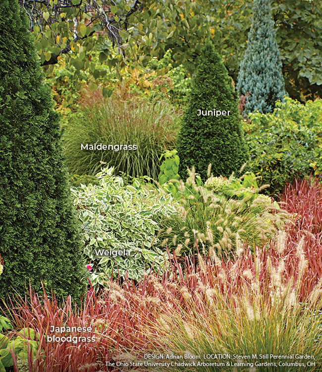 Adding-structure-to-your-garden-create-contrast-Labels: Repeating one shape, like these upright pyramids, around the garden creates a rhythm that pulls the eye along.
