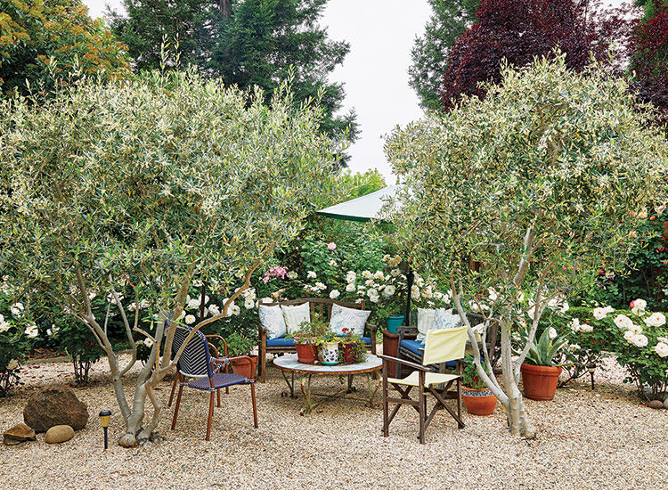 Olive lounge in the rose garden:Adding container groupings near the outdoor furniture helps connect the planting and seating areas.