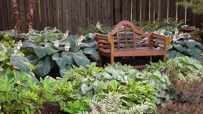Best shade plants: Growing shade-tolerant plants around this bench turns what could be a dull unappealing spot into a welcoming destination filled with color and texture.