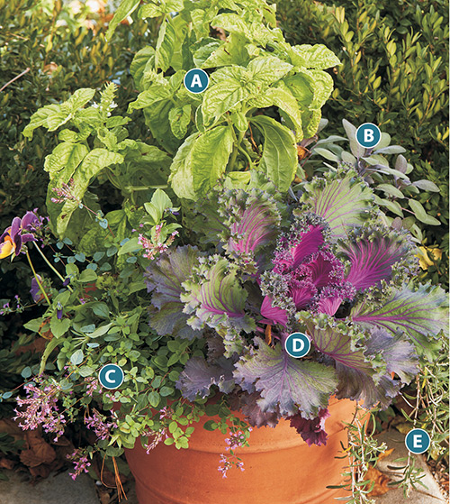 container-herb-garden-ideas-lettered-plan-rosemary-sage-oregano-basil: This herb container has it all, including ornamental kale for added color.