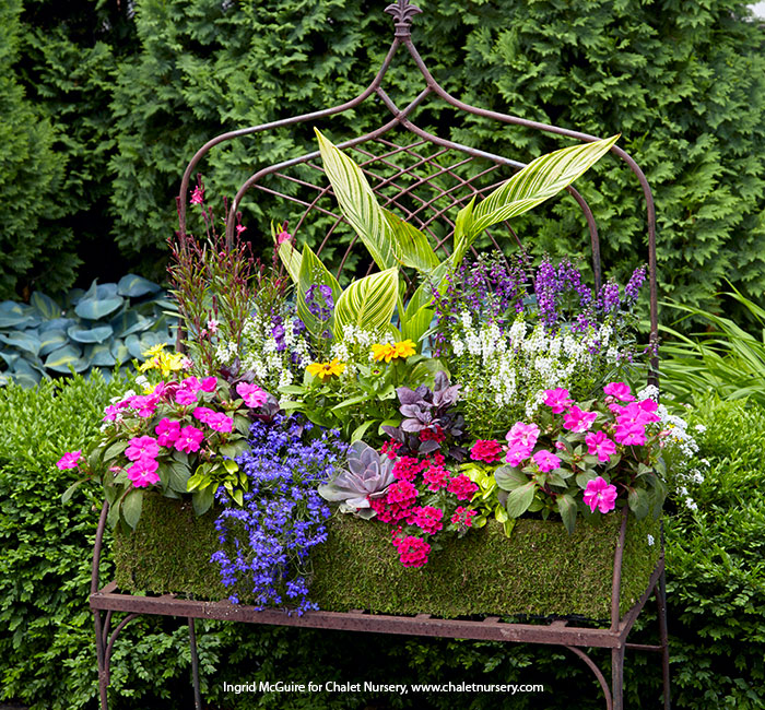 colorful-summer-container-ideas-canna-succulent-impations-verbena-lead: An easy way to design a container is to pick one main plant, like the canna here, and then build out from there, choosing plants that  descend in height down to the edges of the container.