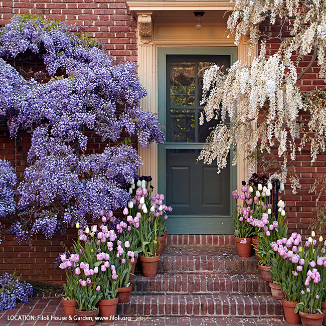 6-ways-to-create-a-beautiful-spring-garden-pastel-color-palette: Point the way with pots of tulips lining the steps. Stick with one or two colors that coordinate with the house trim or foundation planting for a coordinated look.