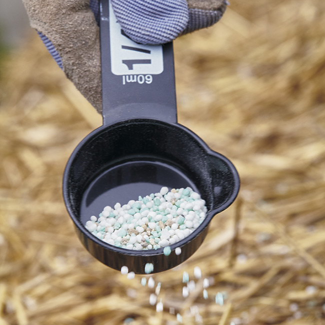 fertilizing a straw bale garden: Sprinkle fertilizer evenly across the top of the straw bale.
