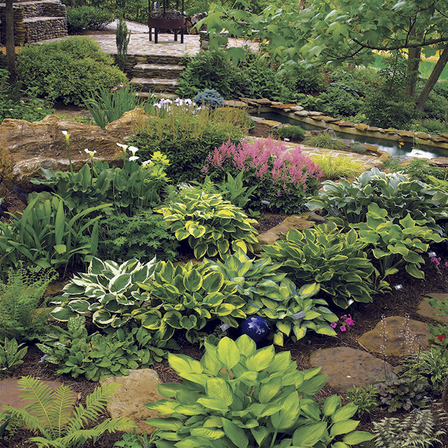 Hostas and Astilbe shade garden: Gardens with lots of one plant don't need to be boring. Just mix different leaf colors and bloom times, like these clumps of hosta and astilbe.