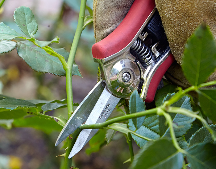 Needle Nose pruners: Needle-hose pruners work best on green stems and for deadheading.