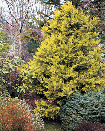 winter-color-plant-combination: A mix of conifers and heath plants add color and texture to a winter landscape.