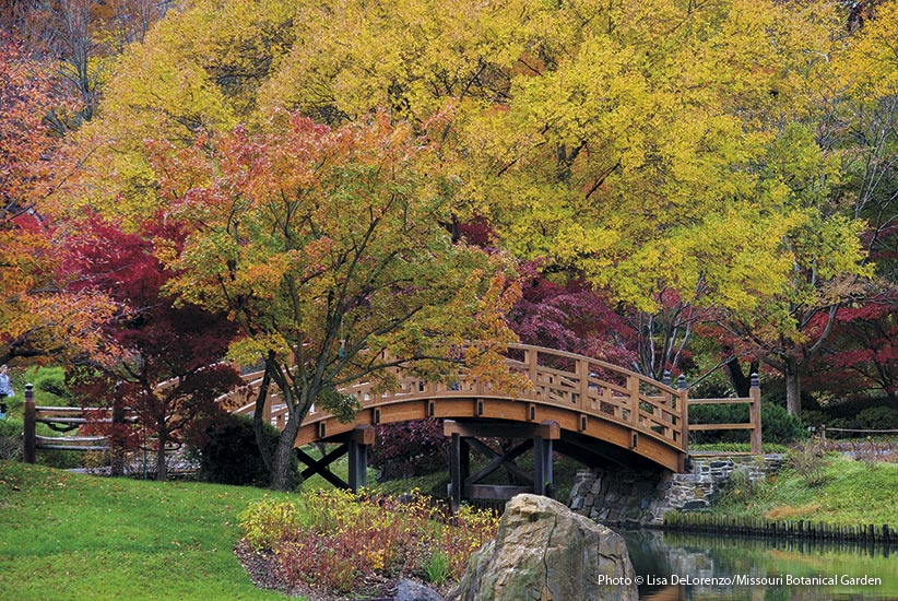 bridge with fall foliage: After a summer of subtle shades of green, fall foliage bursts into view.