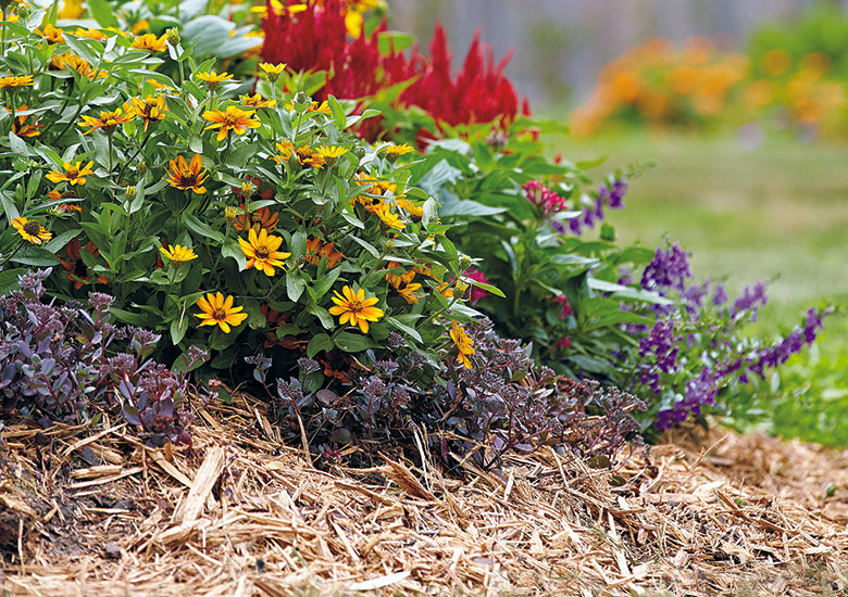 summer-flowers-that-can-handle-the-heat-Add-mulch: Mulch is one way to hold moisture and cool the soil when temperatures soar. Light-colored mulches like this shredded cedar reflect heat best.