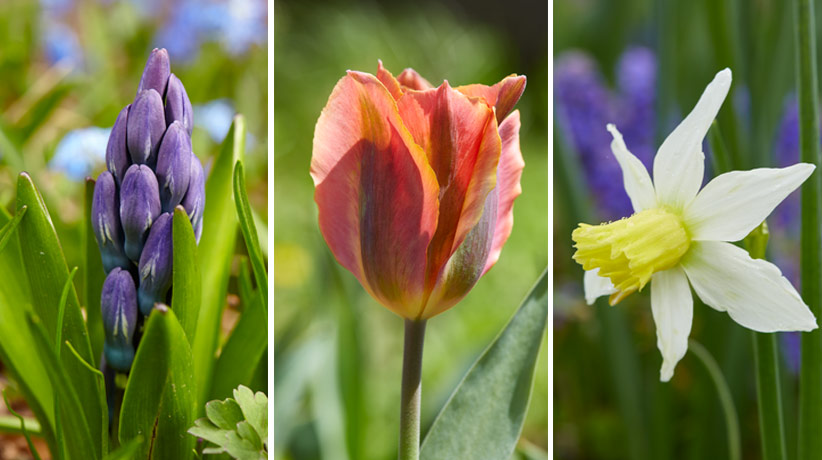 Here Are Some Of Our Favorite Mail Order Garden Companies That Sell Large,  Healthy And Beautiful Bulbs. See What We Like About Each One In The List  That ...
