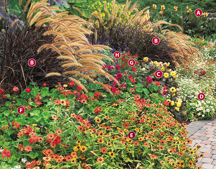 Fall-ornamental-grass-garden-design-ideas-zinnia-dahlia-purple-fountain-grass