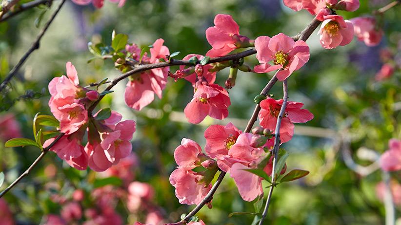 Your Handy Shrub Pruning Guide Garden Gate